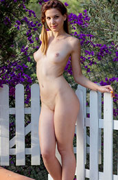 candy-sweet-strips-near-the-picket-fence